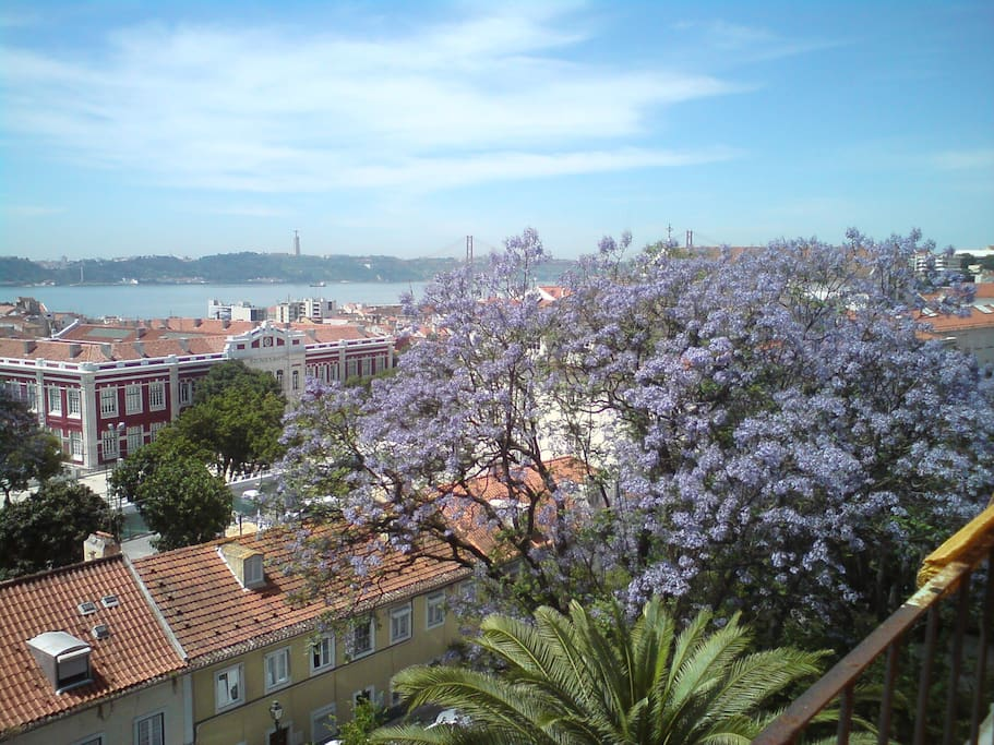 view from the loft in may & june when the jacarandas are in bloom...