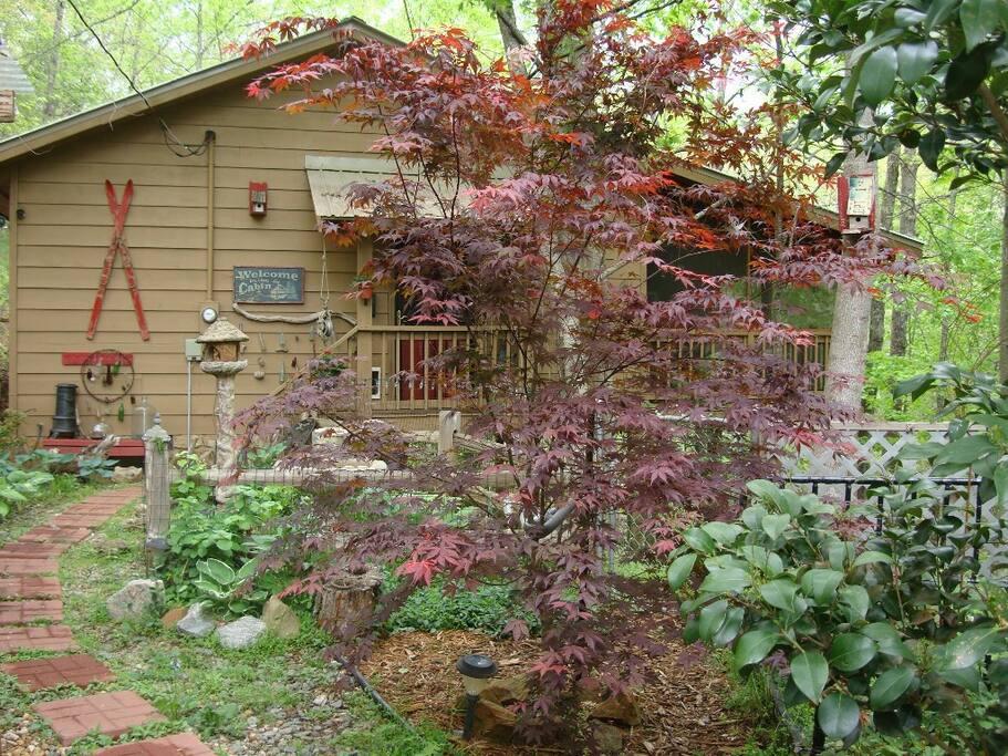 cabin front-  court yard shade garden.