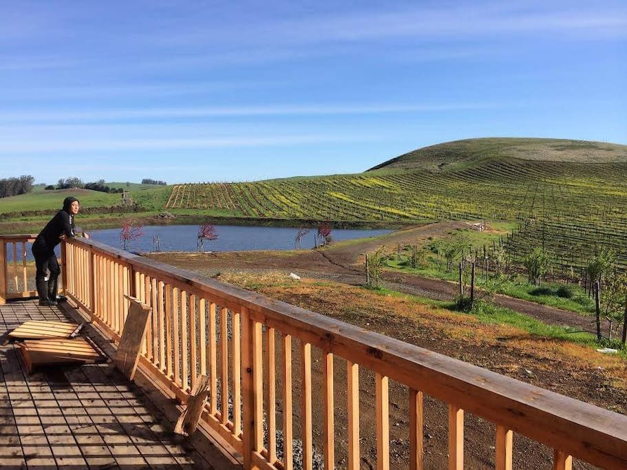 Deck overlooking the private vineyard and pond