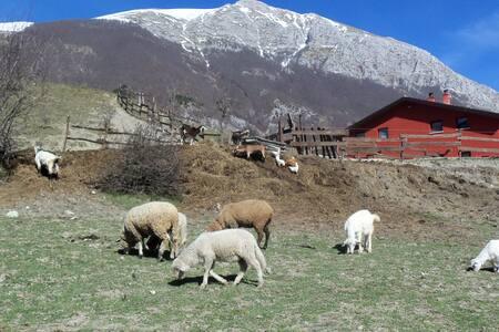 Camera family in Fattoria// Abruzzo - Hytte (i sveitsisk stil)