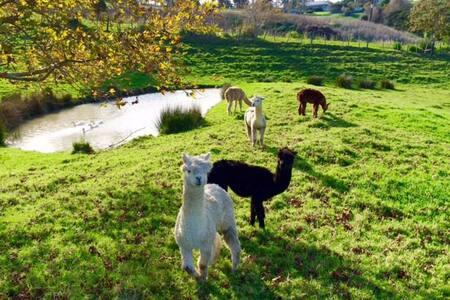 Quiet getaway near Auckland - Helensville - Talo