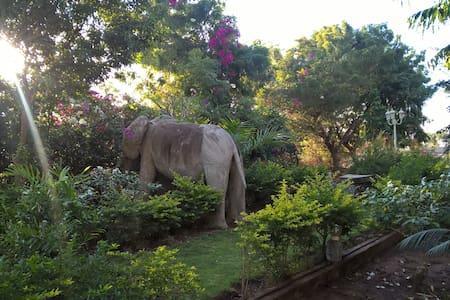 Quiet and cozy garden bungalow - Bungalow