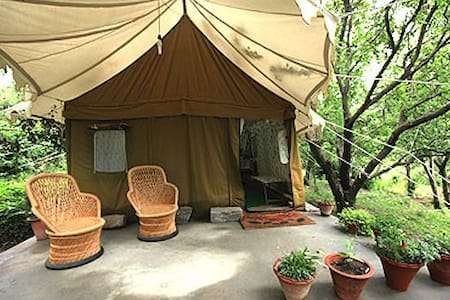 Exotic swiss tent house in Manali - Katrain - Tent