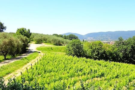 Lovely agriturismo with pool (Apartment Glicine)! - Colombiera-molicciara - Apartment