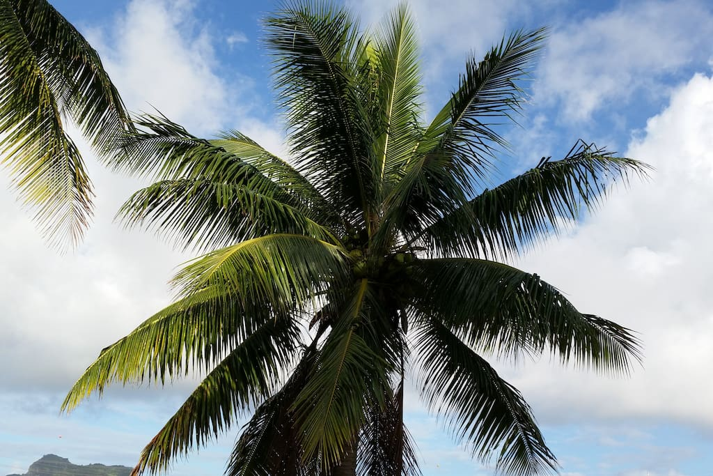 Large coconut palms frame the grounds.