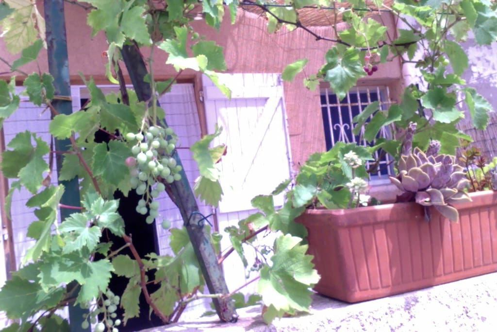 Notre terrasse sous la treille au calme d'une impasse typique