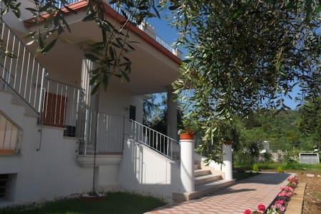 Ferienhaus in üppigen Olivenhain - Wohnung