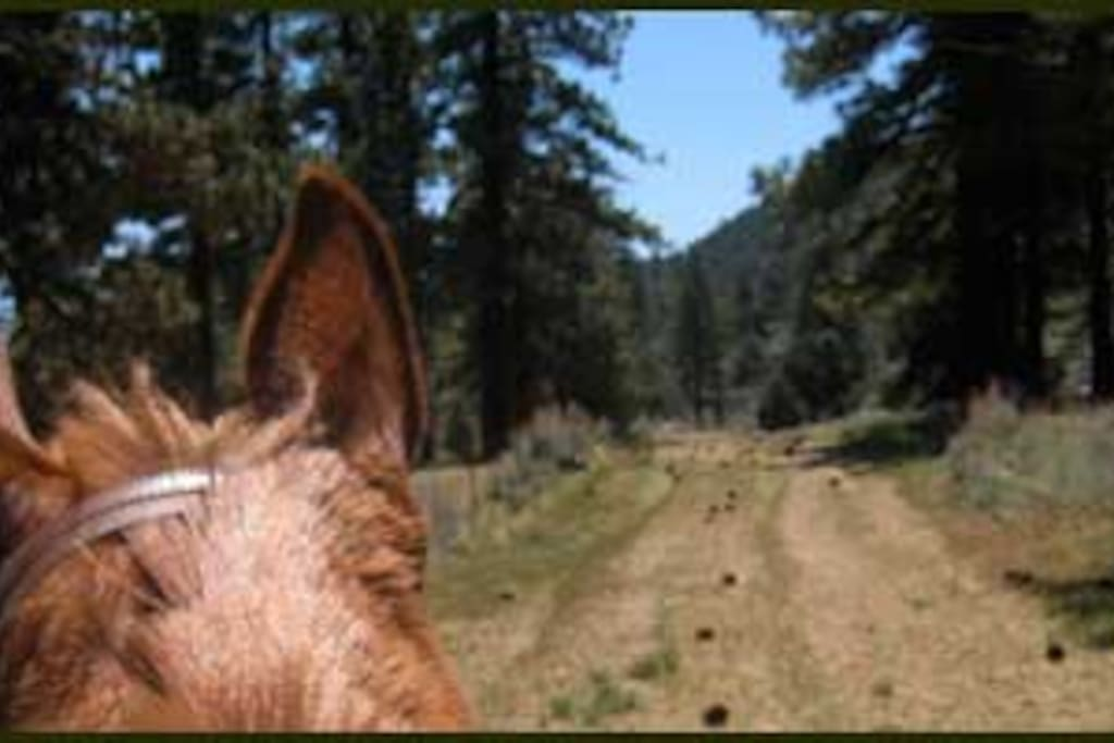 One of our many horse trails