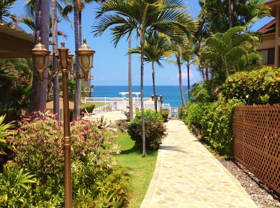 Tropical greenery on the path to the oceanfront pool