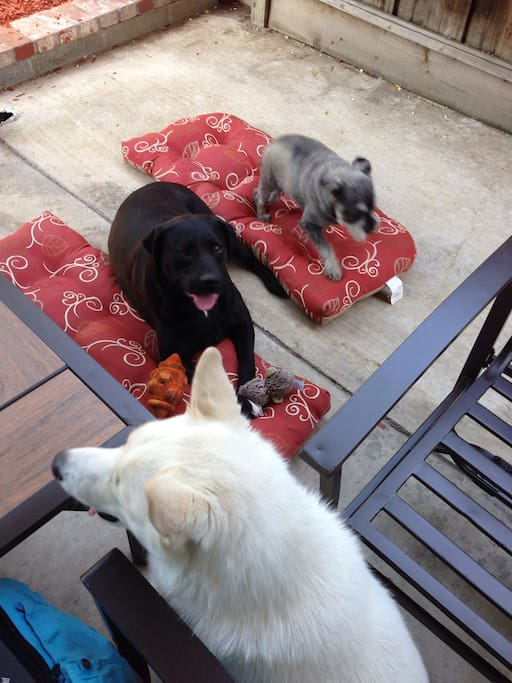 Playful puppies on the property - they own the backyard and garage.