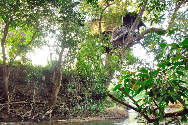 Mango Treehouse and the stream beneath.