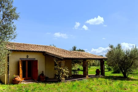 Incredible Organic Olive Farm - Apartment