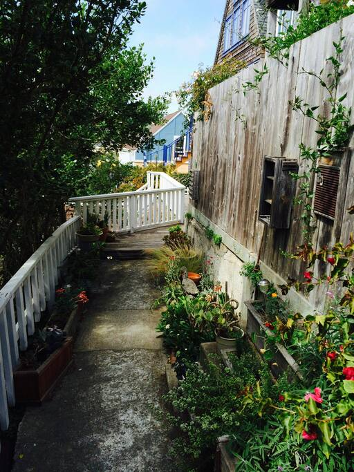 Flowering plants and succulents welcome you along our private path