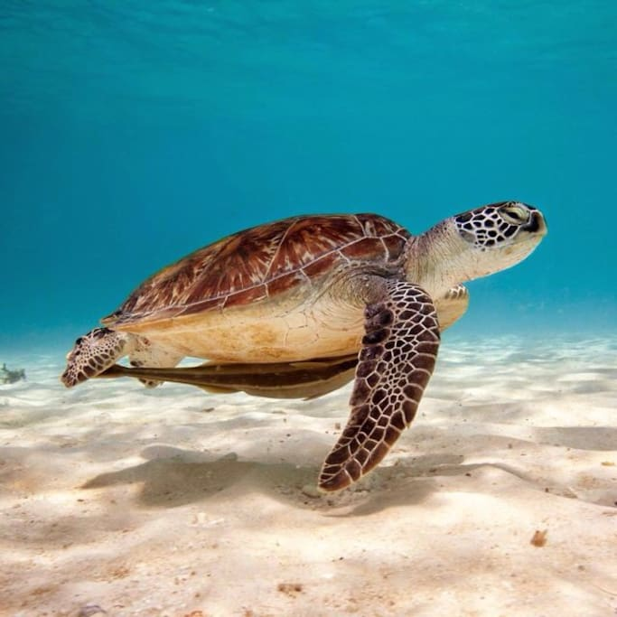 Swim free with the turtles in Akumal