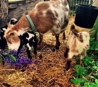 The Ginger Goat Farm - Cabin