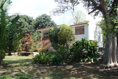 maison dans jardin tropical - Haus
