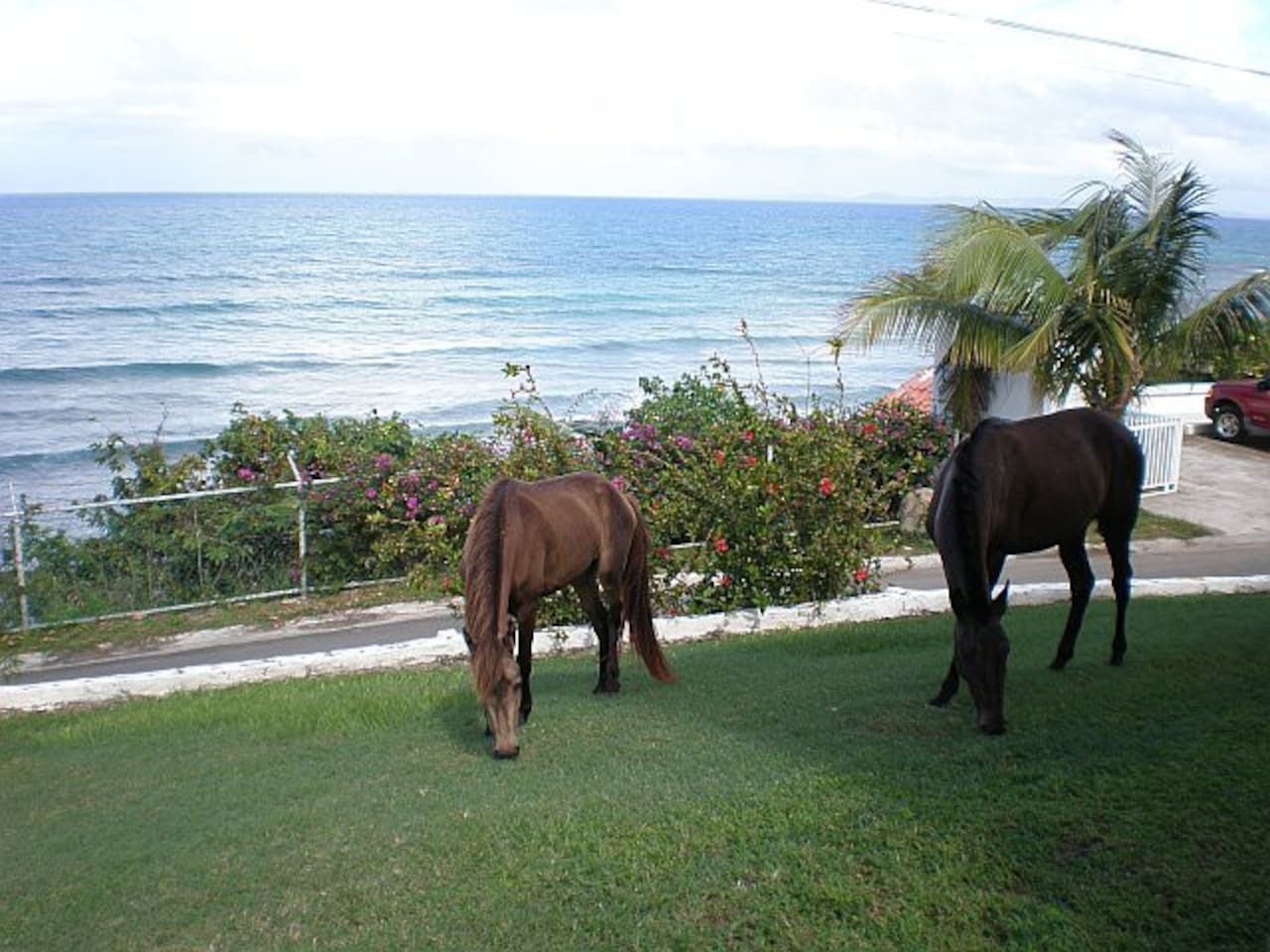 Great view from the patio while some local residents visiting in our front yard :-)