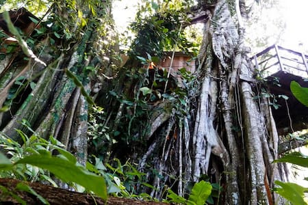 Caribbean Jungle Tree House by Sea - Rumah atas pokok