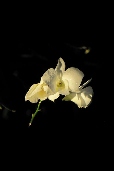 Our white orchid logo in memory of my mother, Connie.