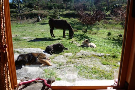 Quinta da Nanatureza  ideal retreat - Casa
