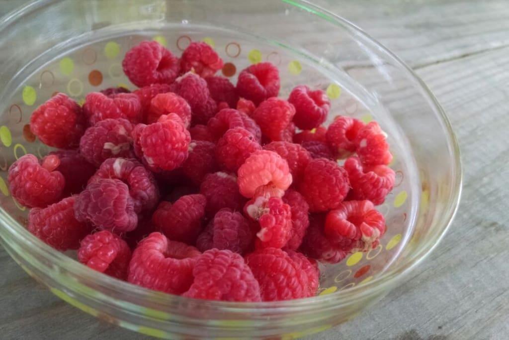 Organic raspberries fall 2014