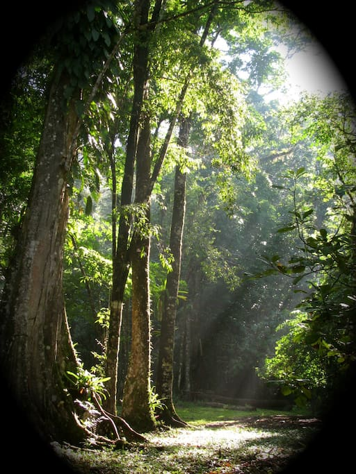 Morning light filters through the trees, with 480 acres of gardens and rainforest there is lots to see and explore