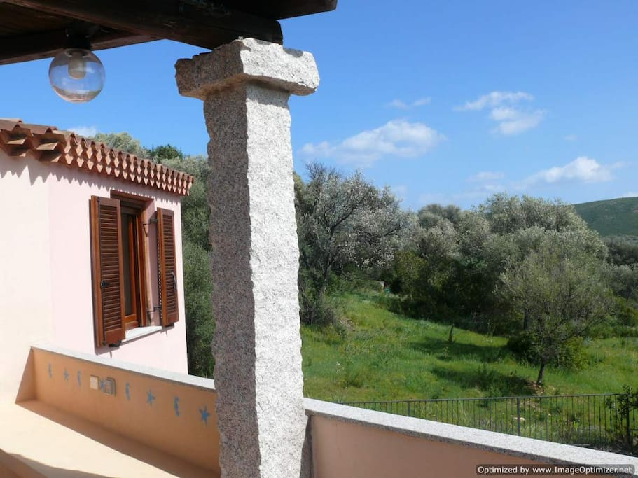 View from the terrace on the olive trees hill