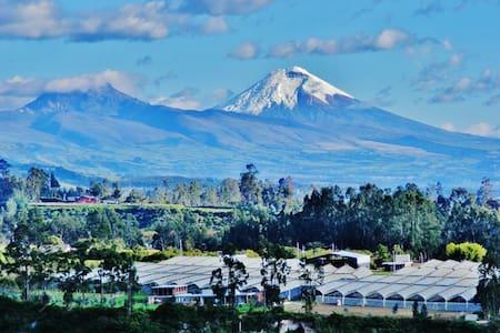 Cotopaxi Room - Quito