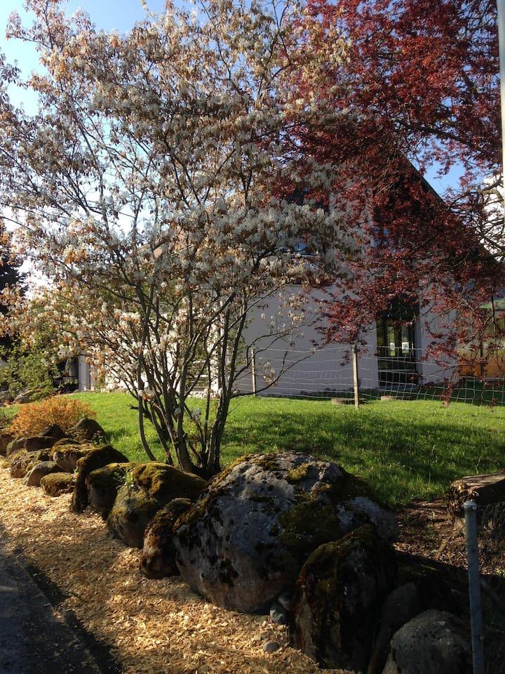 La maison et son jardin ombragé