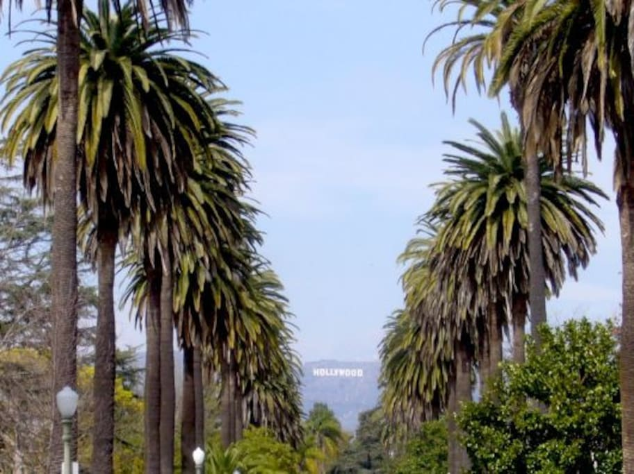 Iconic palm tree lined street with a distant view of the Hollywood Sign