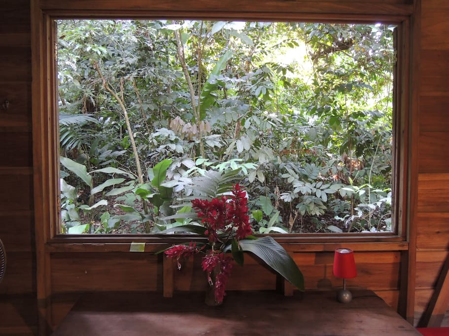 View from your jungle desk