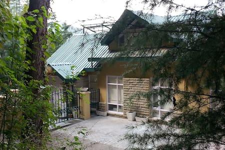 Forest hill Villa Mashobra. - Villa