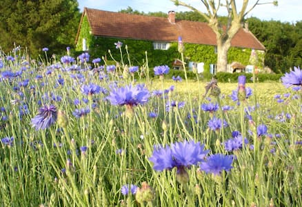 B&B in the Burgundy countryside - Bed & Breakfast