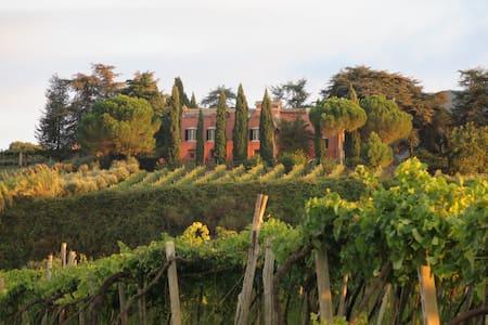 Historic Villa, Vineyards, Olive Groves Near Rome - Monte Porzio Catone - Villa