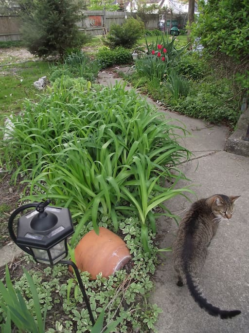 Tom In the garden.