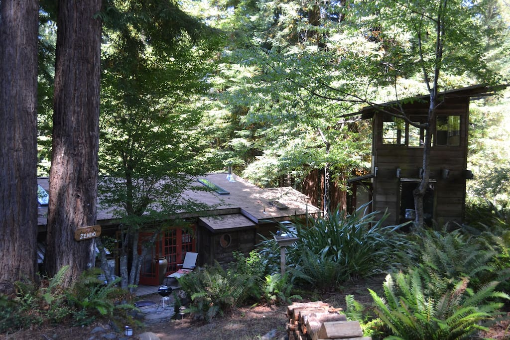 Under the Redwood Trees