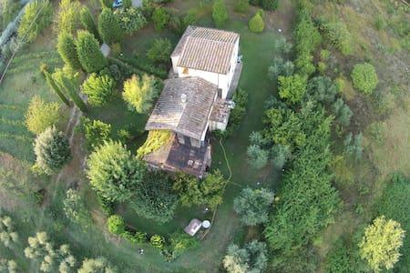 Ulivi Romani, la pace in Sabina. - Talo