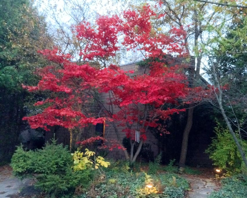 Front maple