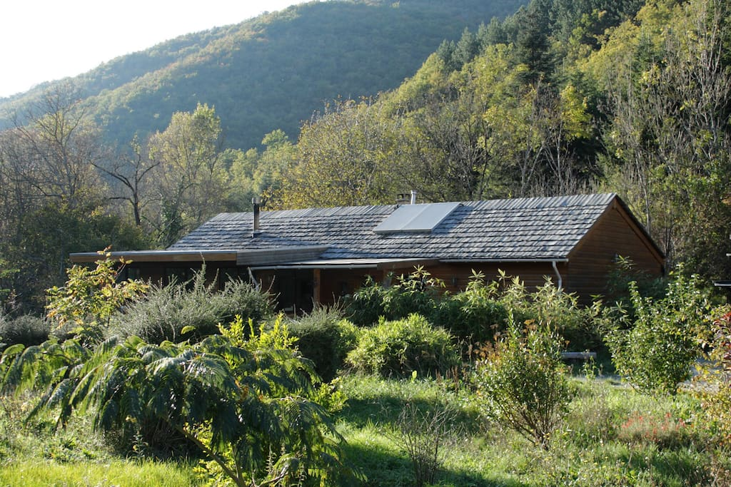 Cottage full of dragonflies in natu