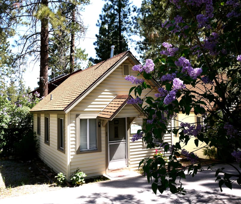 Cozy big bear cabin wild flower cabins for rent in big Big bear lakefront cabins for rent