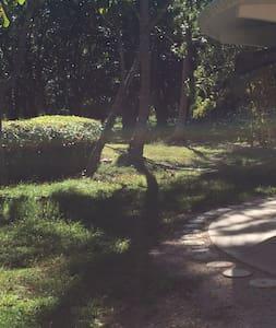 Igloo house in the jungle