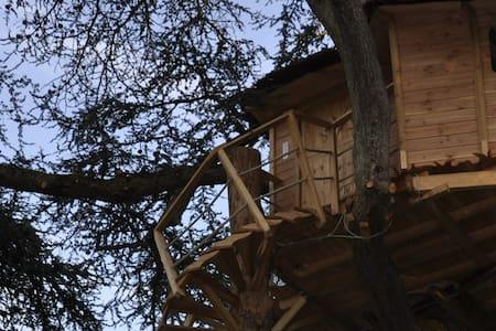 Cabanes perchées dans les arbres - Ağaç Ev