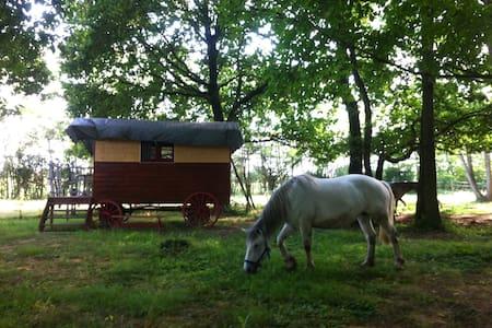 La barjoulotte (petite roulotte) - Sornay - Campingvogn