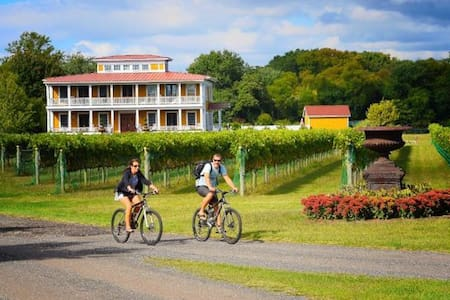 Vineyard peace and delight - West Cape May
