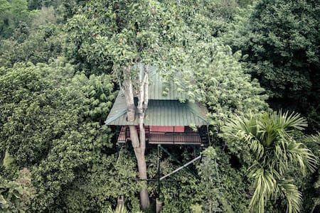 Tree Hut - Kalpetta - Bed & Breakfast