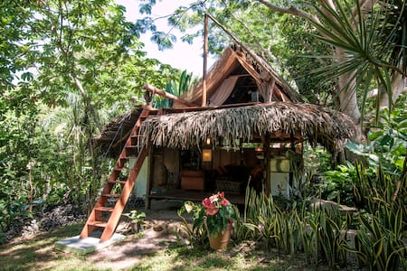 Tree House in the Jungle - Treehouse