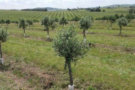 Farmstead within olive plantation - San Carlos - Villa