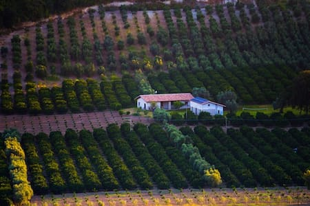Agriturismo A Pignara - Il Limone - Haus