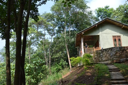 Honeyland - Cabana in the jungle  - Dambulla