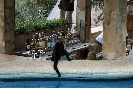 Monkeys & Affordable Luxury